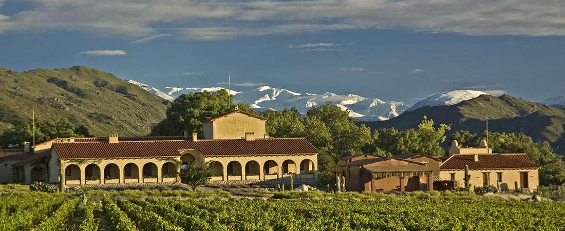 Los viñedos más altos del mundo crecen en Salta