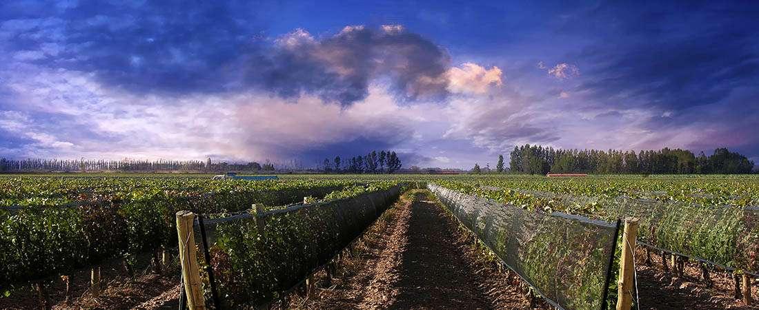 """Vinos argentinos: """"El cielo es el límite"""""""