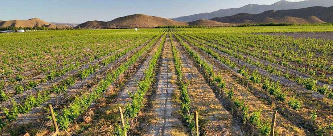 Las rutas del vino por los Pueblos Mágicos de México