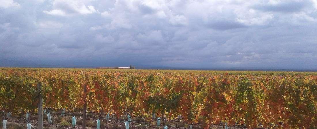 Experiencias naturales: vinos, arte, enormidad de paisajes