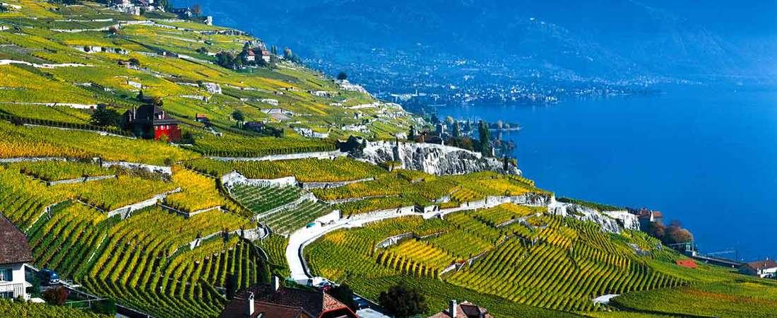 Suiza: viñedos en terrazas sobre el lago Leman