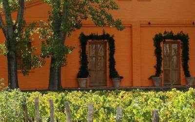 El grupo suizo Origin Wine compra el 100% de  Finca La Anita